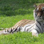 O Jardim Zoológico recebeu a equipa dos Retratos Contados e a família da Sónia Morais Santos, para uma tarde bem divertida